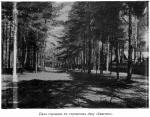 """Егорьевск, Дачи горожан в городском лесу """"Самгино""""."""