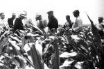 На кукурузном поле в колхозе, 1959 г.